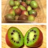 Sass 101:  What is a Kiwi Berry?
